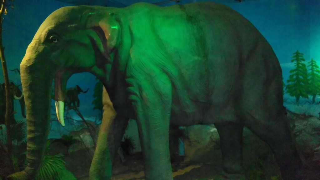 Elephant Model in science centre