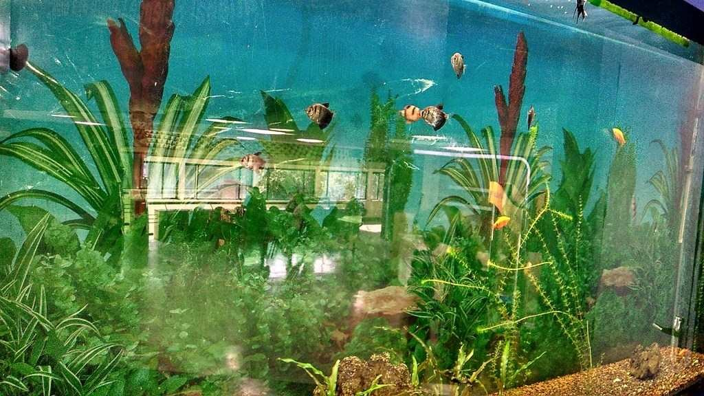 Aquarium in Science Centre