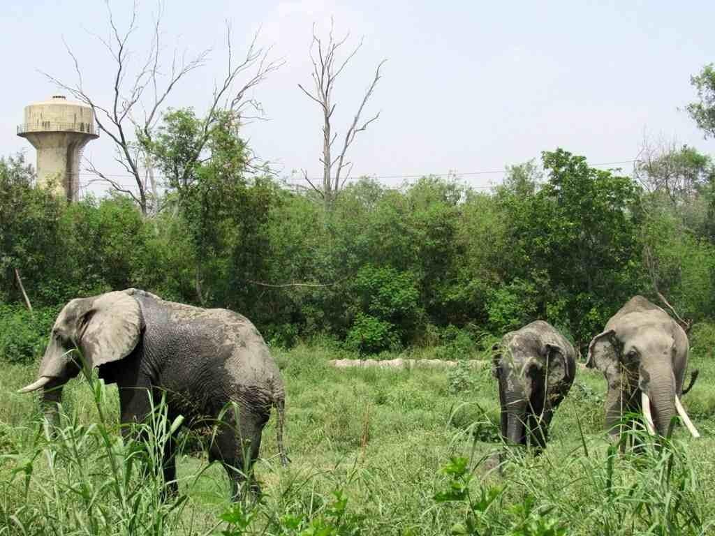Elephants in Delhi Zoo