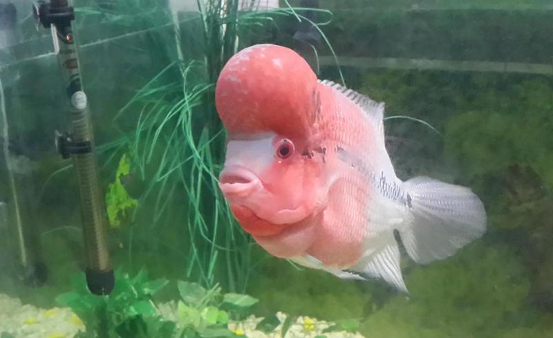 Fish in Lucknow Zoo Aquarium