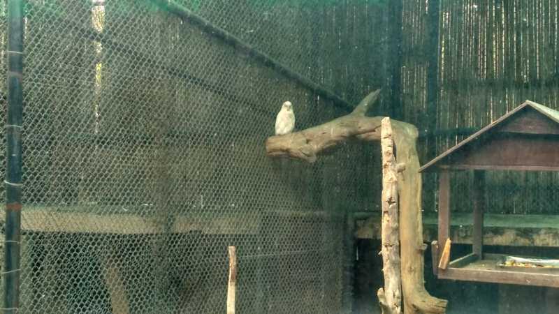 White Owl Delhi Zoo