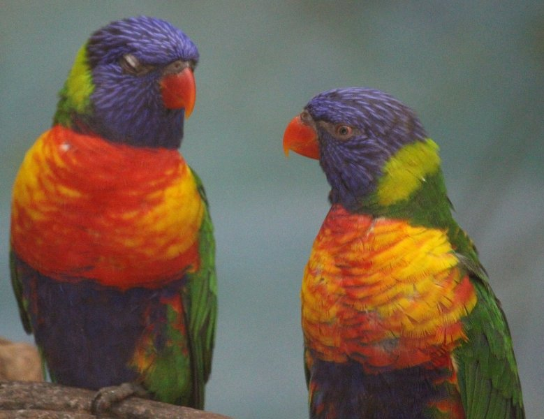 Colorful Birds at Mysore Zoo