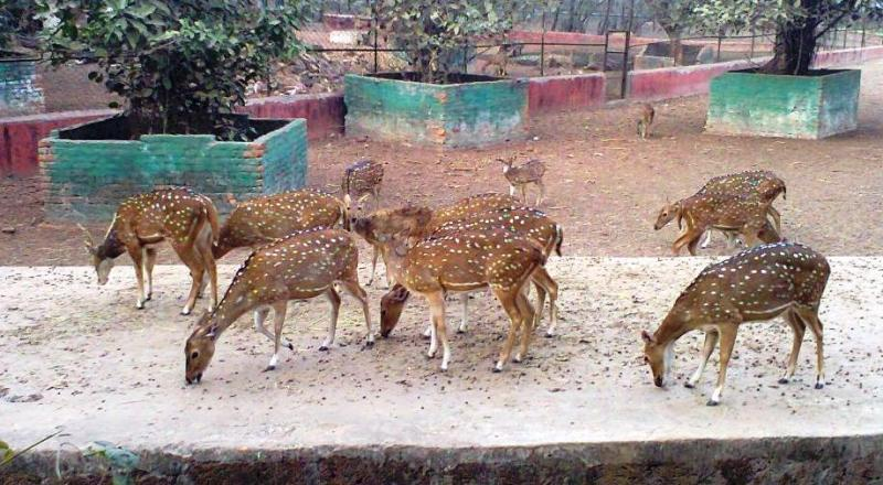 Deer Family at Bhubaneswar Zoo