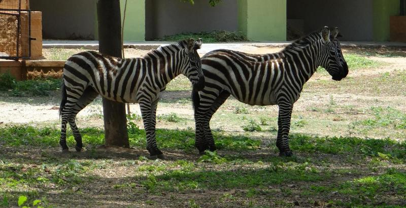 Mysore Zoo Timings, Tickets, Entry Fee and Address