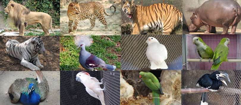 Image displays Alipore zoo, Kolkata Zoo Animals and Birds