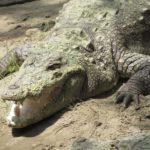 Rajiv Gandhi Zoological Park, Katraj