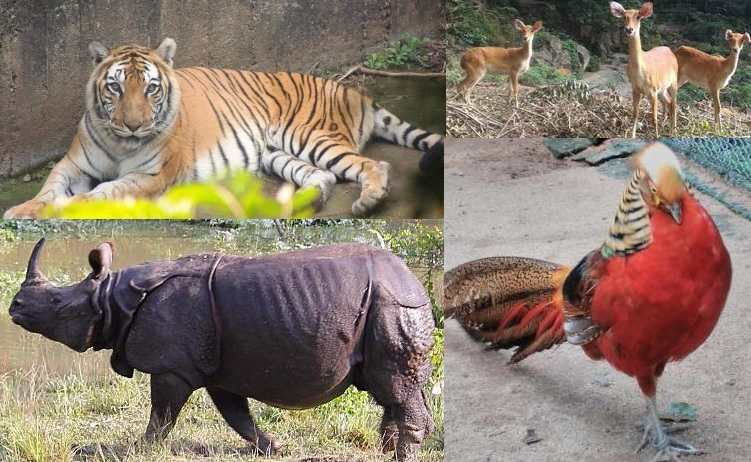 Guwahati Zoo Timing, Ticket Price and Address - Assam State Zoo