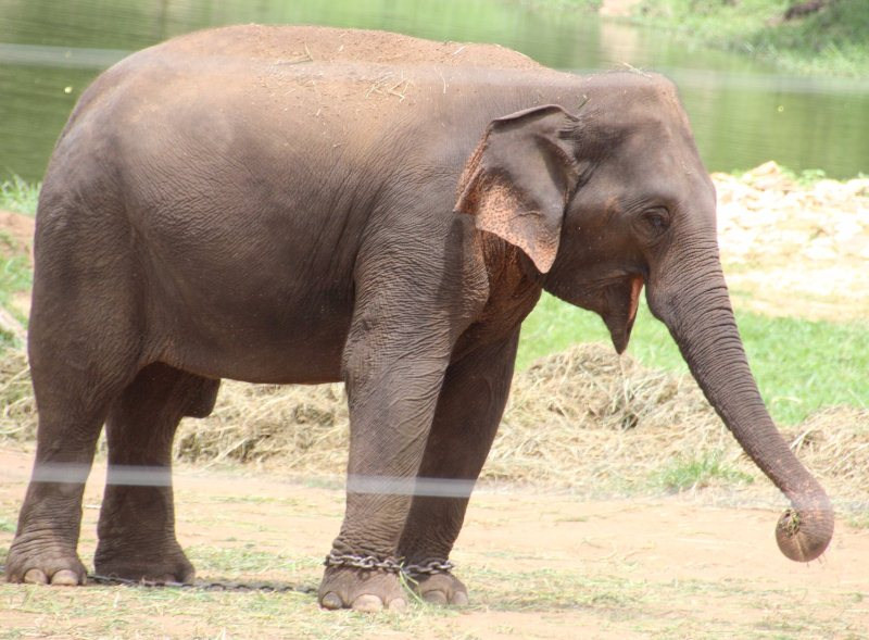 Elephant at Bannerghatta National Park