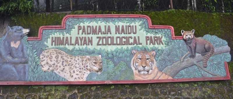 Padmaja Naidu Himalayan Zoological Park Darjeeling Entry