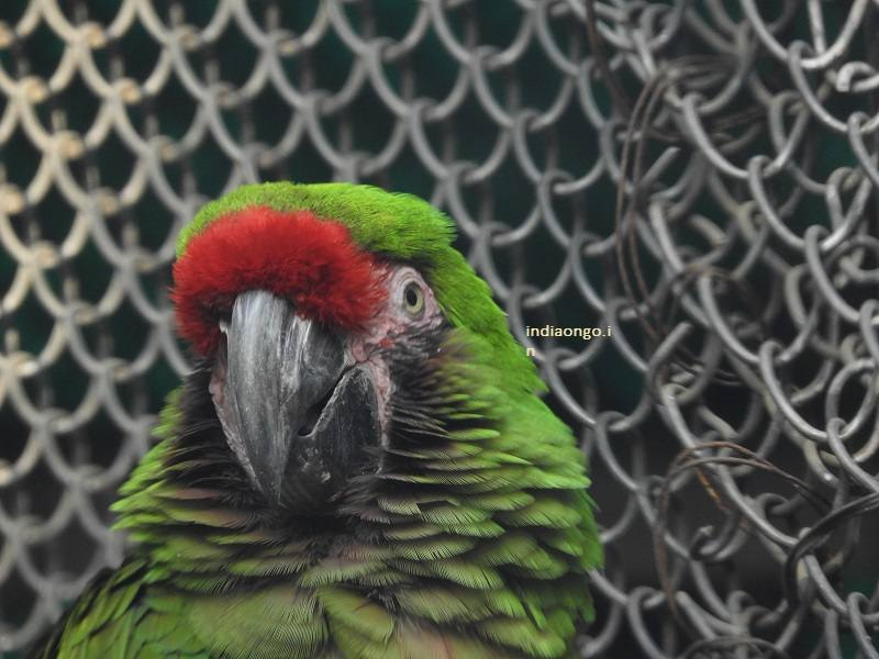 Close Up Shot of the parrot