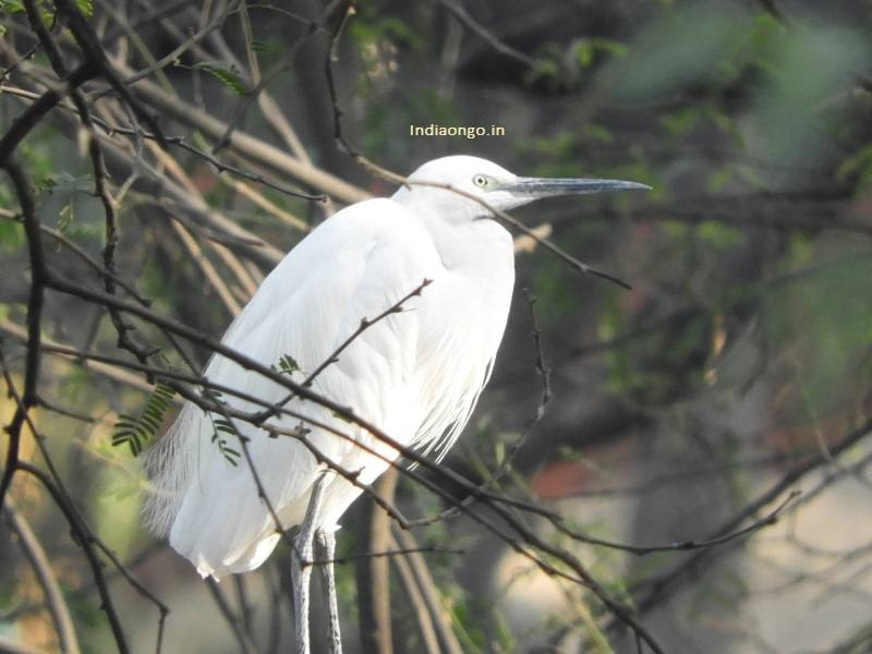 White Bird in the open space of Zoological Park