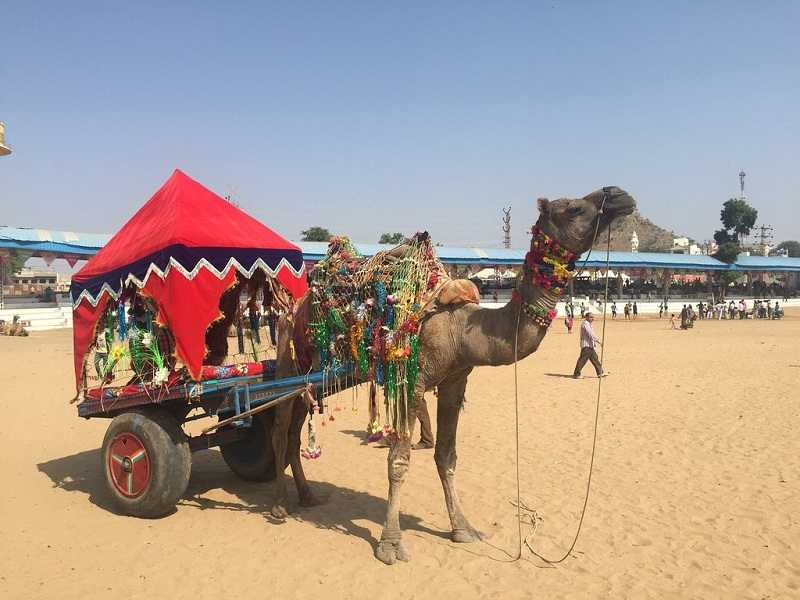 Hotels in Pushkar Fair 2018